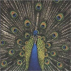 bluetones-expecting-to-fly